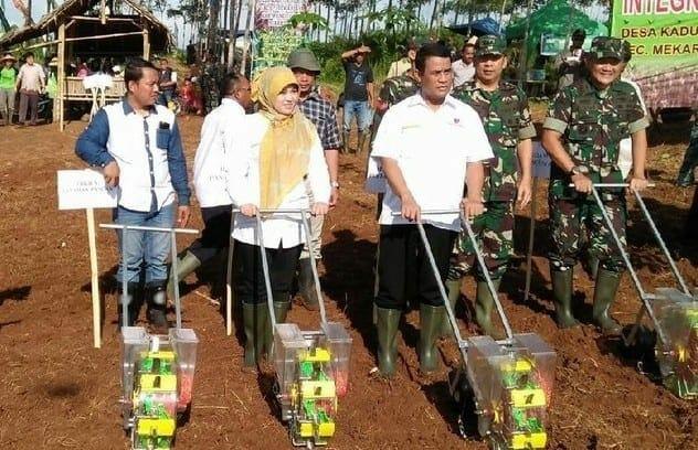 Mentan Amran dan Bupati Pandeglang Panen Jagung 120 Hektar
