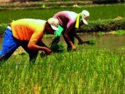 Raih Pendapatan Ekonomi di Usaha Pertanian, Pemkab Lebak Ajak Anak Muda Jadi Petani