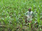 Empat Program Prioritas Desa Dorong Pertumbuhan Ekonomi Pandeglang