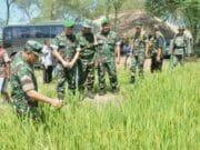Dukung Swasembada Beras, Pemkab Lebak Libatkan TNI Cetak Sawah Baru