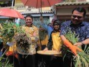 Panen Jahe Hingga Nikmati Olahannya di Kota Tangerang