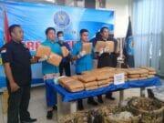 Ganja 50 Kilogram Sitaan BNN, Milik Warga Binaan Salah Satu Lapas di Banten