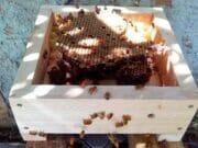 Kenalan dengan Si Lebah Kecil Trigona Yuk!