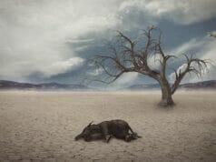 Dampak Pemanasan Global Terhadap Keanekaragaman Hayati Laut