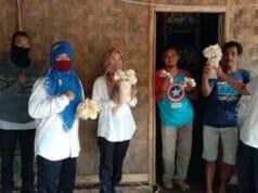 Jamur Tiram Tuai Berkah Di Tengah Pandemi Covid-19