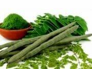 Nutrisi Dan Potensi Moringa Oleifera