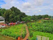 Kota Tangerang Punya Agrowisata Baru Loh ! Cek Lokasinya