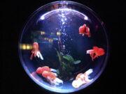 Peluang Usaha Aquarium Hias