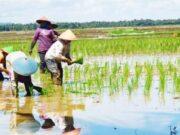 DPP HIPMA MPH; Pemerintah Perlu Maksimalkan Penyerapan Beras Dari Petani