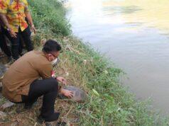 Wakil Gubernur Banten Andika Hazrumy saat melepasliarkan Kura-kura ke sungai Cisadane.