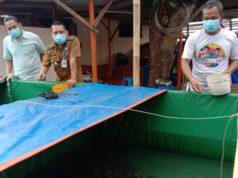 Berawal Dari Pelatihan Bertahan Ditengah Pandemi, KUTIL di Cimone Berlimpah Lele